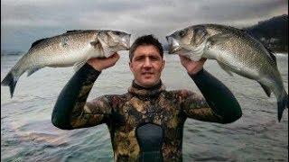 Çiftleme Balık Avlarım(Mavi Toros)