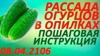 Рассада огурцов и кабачков в опилках.  Пошаговая инструкция  8 апреля 2016