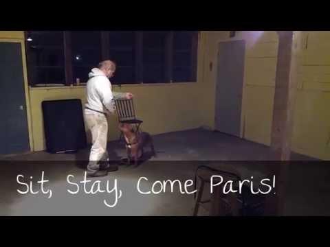 Adopt Paris from Rescue Ridge!