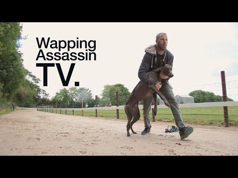 Wapping Assassin TV - Sean Conway Greyhound Breeder - Ireland PART I
