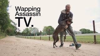 Wapping Assassin TV  Sean Conway Greyhound Breeder  Ireland PART I