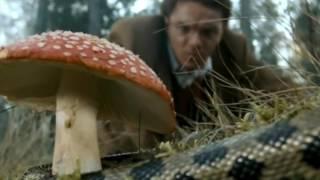 Эпизоды с грибами из советских и российских фильмов