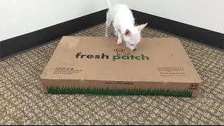 Fresh Patch vs. Potty Pads