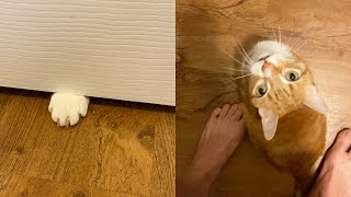 House Cat Rules - Never Close the bathroom Door! #shorts