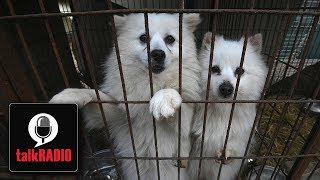 """Eating dog meat is abhorrent"" 