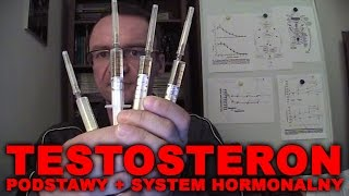 Testosteron - podstawy i system hormonalny