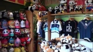 Giant Panda Souvenir Shop, Ocean Park, Hong Kong 1080p HD
