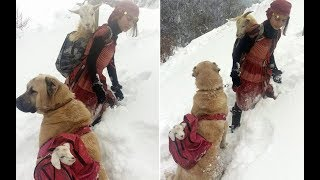 This Girl And Dog Saw A Momma Goat In Desperate Need, So They Launched An Awesome Rescue Attempt