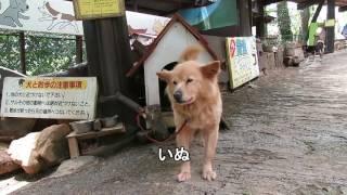 開園41周年を迎える東筑波ユートピアの動物のミニムービーです。