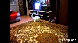 Самые смешные коты. Приколы с котами. Funny cats. 2015о