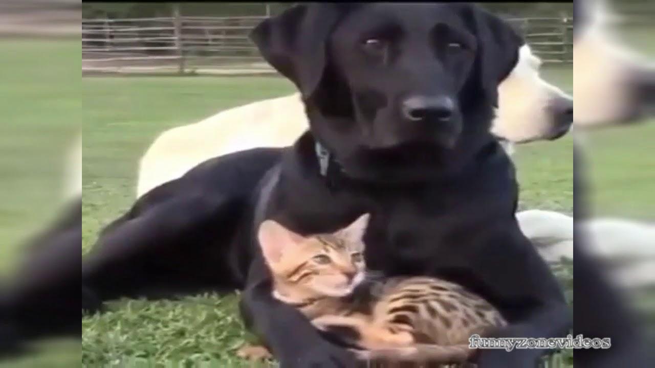 Смешные животные до слез видео с озвучкой