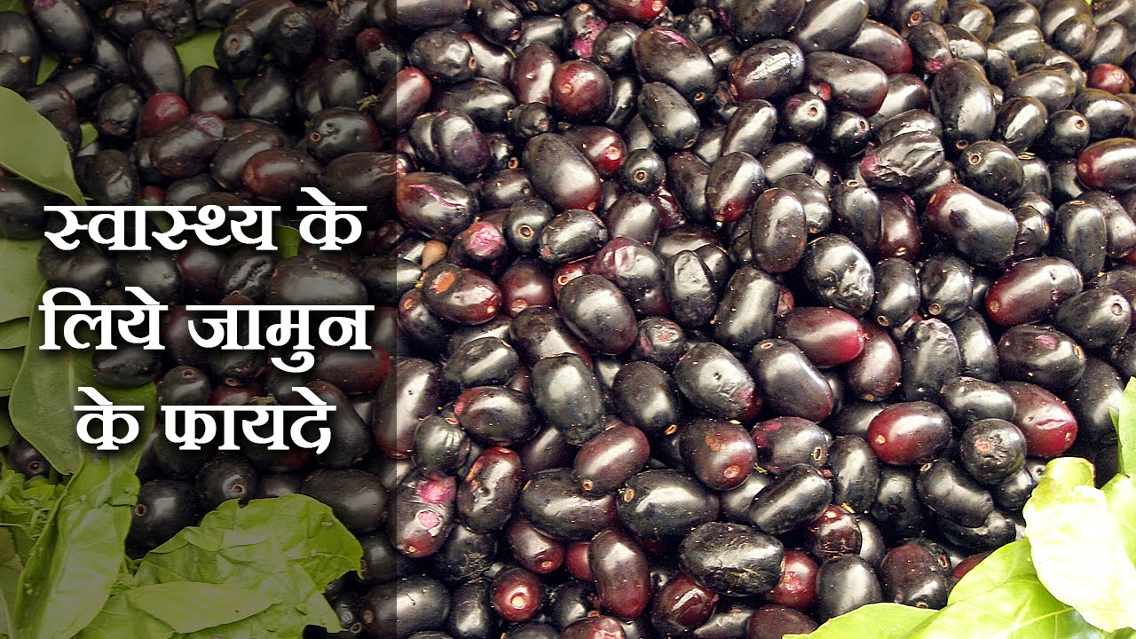 health benefits of jamun in hindisachin goyal - जामुन के लाभ @  jaipurthepinkcity
