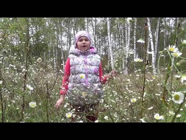 Изображение предпросмотра прочтения – СнежанаЗайцева читает произведение «Полевые цветы» И.А.Бунина
