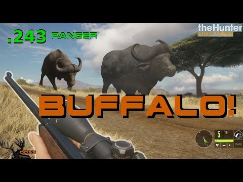 Hunting Cape Buffalo with the 243 RANGER!! (Realistic) Call of the WILD THEHUNTER 2018