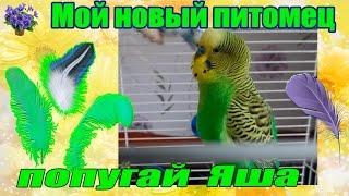 Мои новый питомец волнистый попугай получех Яша. А кто же мой Тоша ? Помогите определить пол!