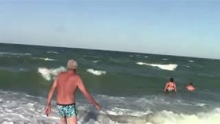 Все дельфины в ураган уплывают в океан