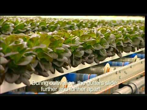 Meet the growers
