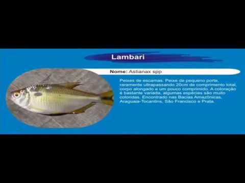 Pescaria de lambaris na miçanga - PESCATERAPIA