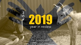 2019 -  Year In Review - Animal Rescue | RESQ Pune, India