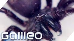 Giftigster Kontinent - Australien   Galileo   ProSieben