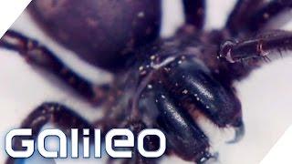 Giftigster Kontinent - Australien | Galileo | ProSieben