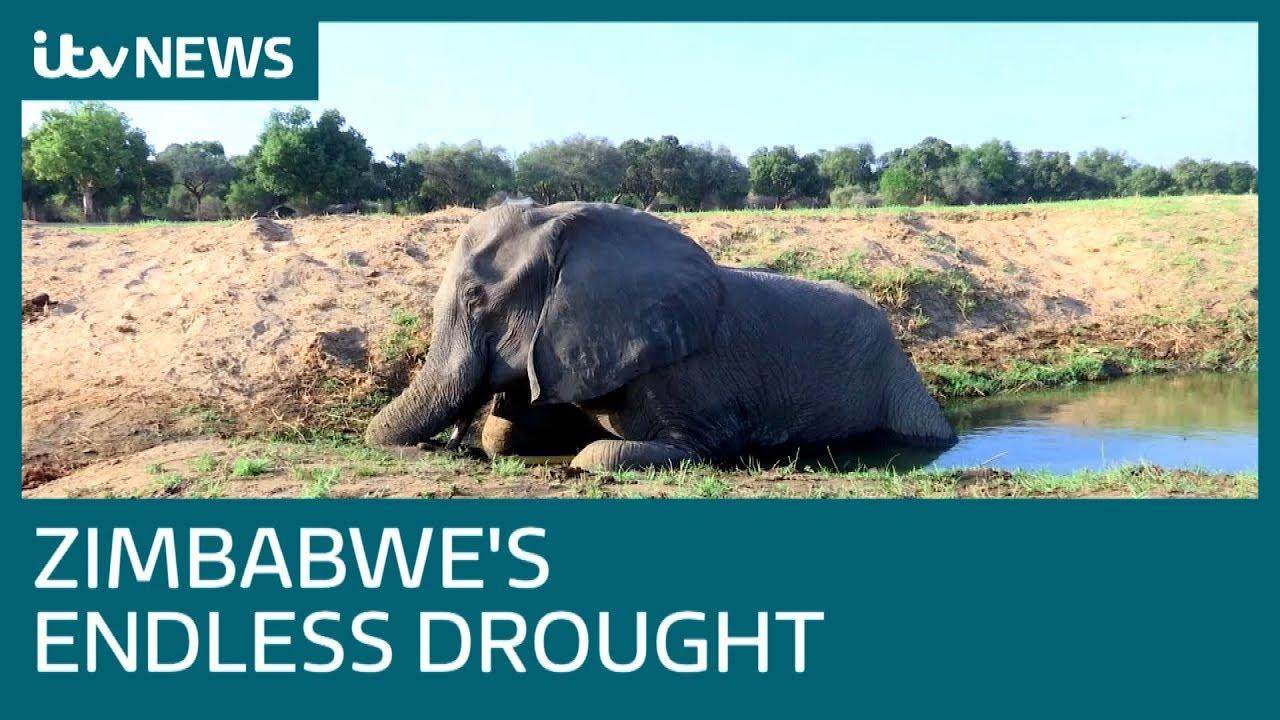 (ZIMBABWE - November 2019) Zimbabwe's National Parks are 'graveyards' due to drought