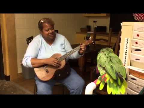 Sami the Amazon parrot sings the blues