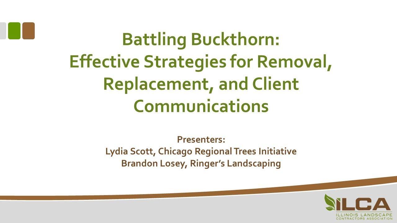Battling Buckthorn Webinar Illinois Landscape Contractors Ociation