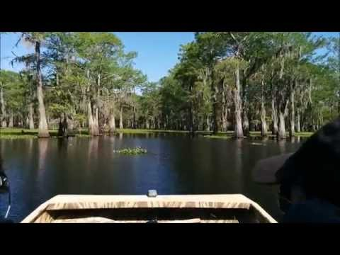 Atchafalaya Basin Air Boat Tour