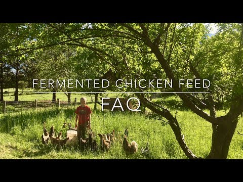 Fermented Chicken Feed FAQ