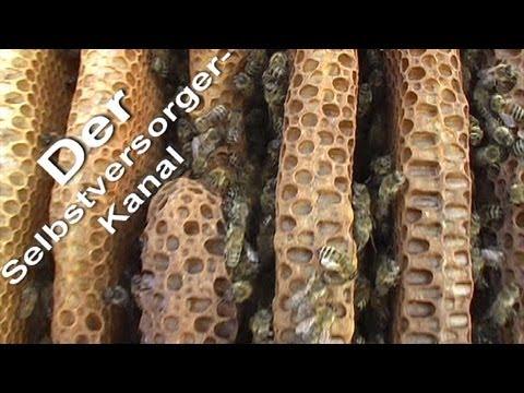 Bienenkiste fuer die Honigernte vorbereiten