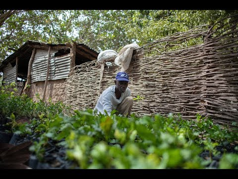 Gambia getting more from cashews
