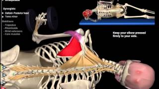 Rotator Cuff Exercises: Video Anatomy for Shoulder Strength & Mobility