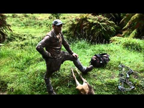 On the hunt for New Zealand Rusa deer: Hunting uraweras: Bow hunting
