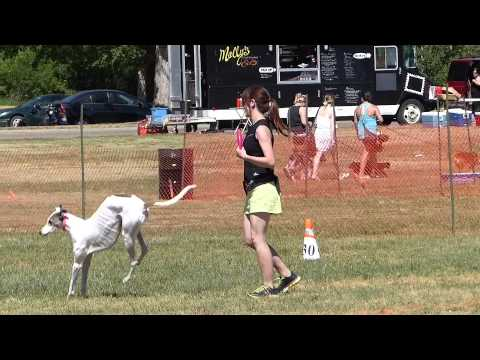PETS🐕 IN THE PARK EVENT ✨2015✨ Edmonton, Alberta 🇨🇦