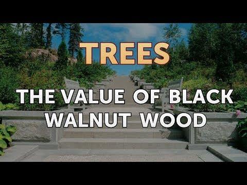 The Value of Black Walnut Wood