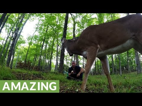 Wild Deer Share Apple With Man In The Forest