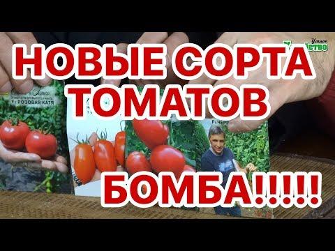 Новые сорта томатов 2018!!! Семко, сливка. В чем изюминка??? | хозяйство | бабушкины | клубники | клубника | голубика | рецепты | посадка | ежевика | своими | руками