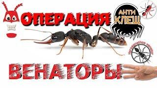 Муравьи Harpegnathos venator. АНТИКЛЕЩ. Лечения клещевого заражения.