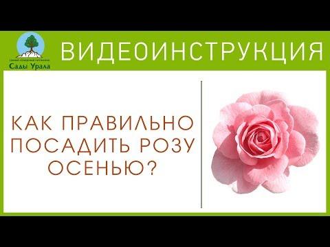 Как правильно посадить РОЗУ? - Видеоинструкция от Питомника Сады Урала