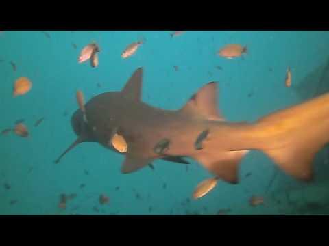 Scuba Diving Sharks North Carolina Wrecks