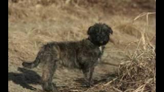 フレンチブルドッグの父とトイプードルの母を持つ犬の成長記録スライド...