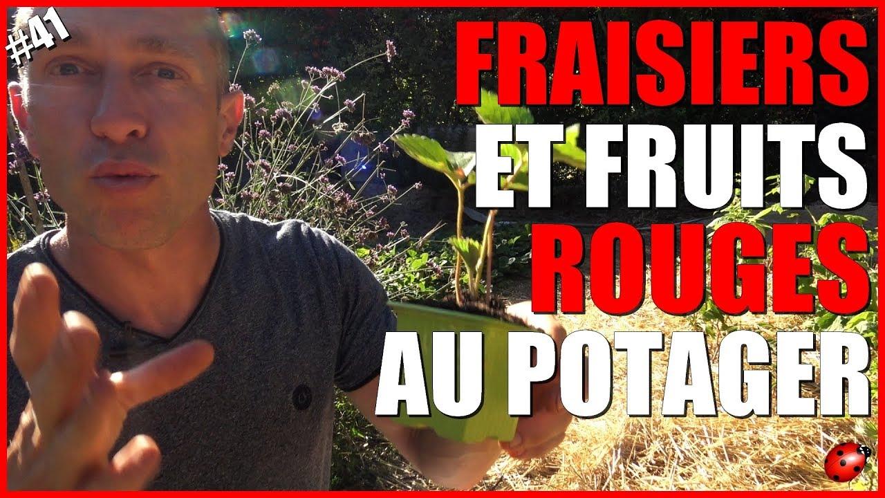 Comment Entretenir Les Fraisiers En Automne fraisiers & fruits rouges au potager