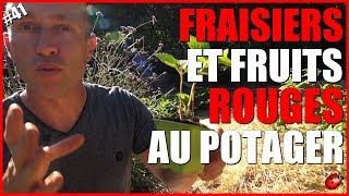 FRAISIERS & FRUITS ROUGES AU POTAGER