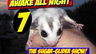 AWAKE ALL NIGHT THE SUGAR GLIDER SHOW EPISODE 7 MAY 2013 CONTEST TALKING ADAMA ROCKS JOHNNY VAN ZANT