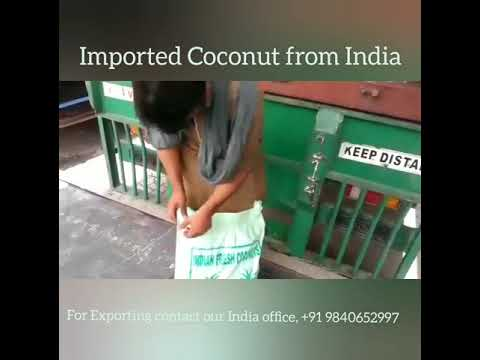 Imported Coconut from India