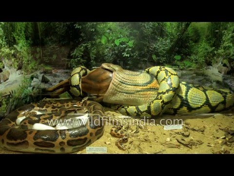 Guindy Snake Park - India's first reptile park in Chennai