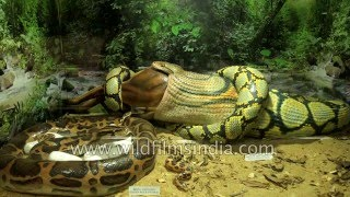 Guindy Snake Park - India-s first reptile park in Chennai