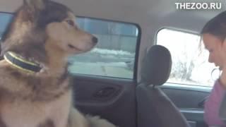 Защитный чехол гамак  для собак для заднего автомобильного сидения