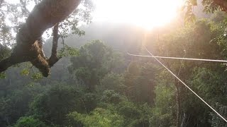 What Is the Gibbon Experience Like in Laos? A Zipline Tour of the Bokeo Nature Reserve